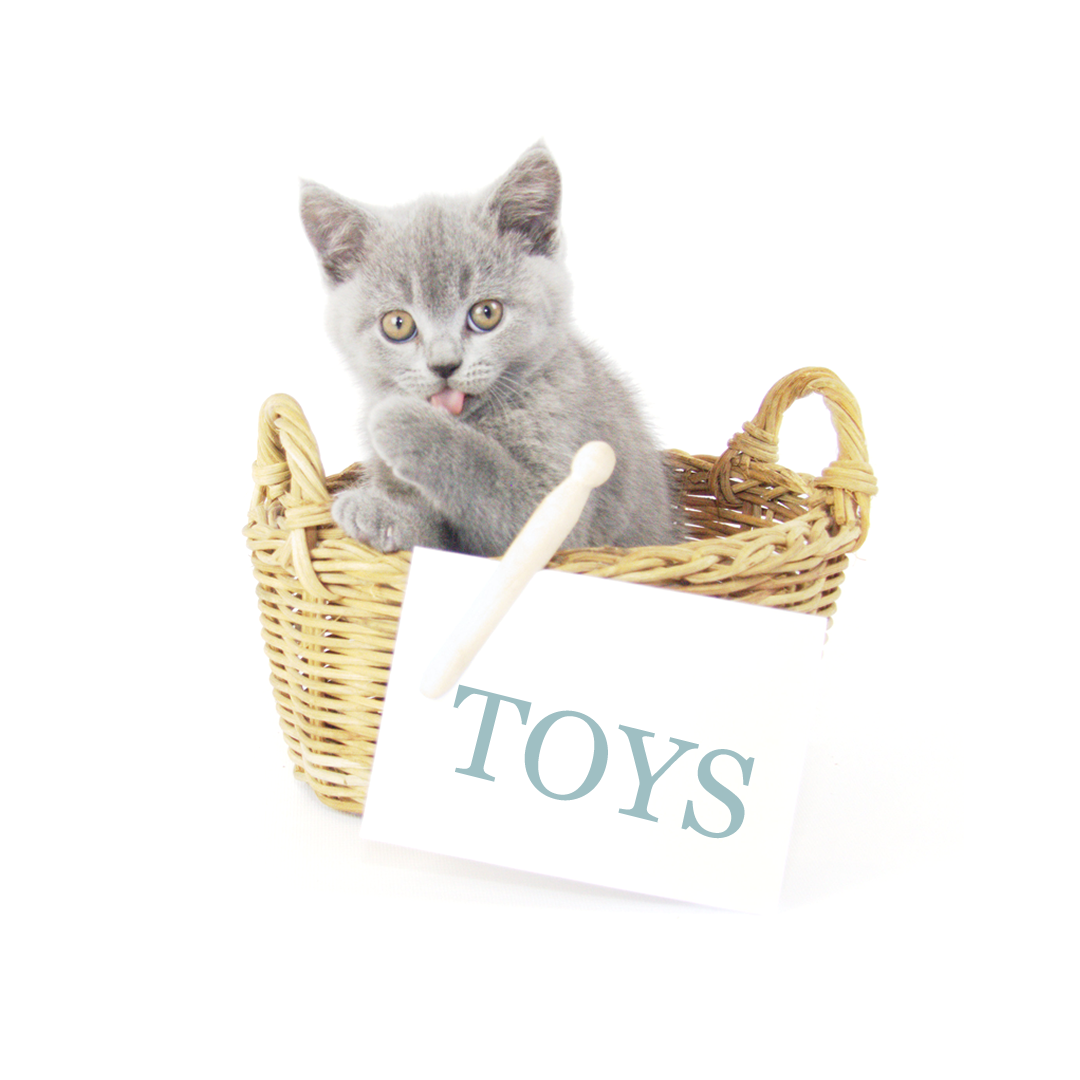 Muffin and Poppy - British Shorthair Luxury Toys