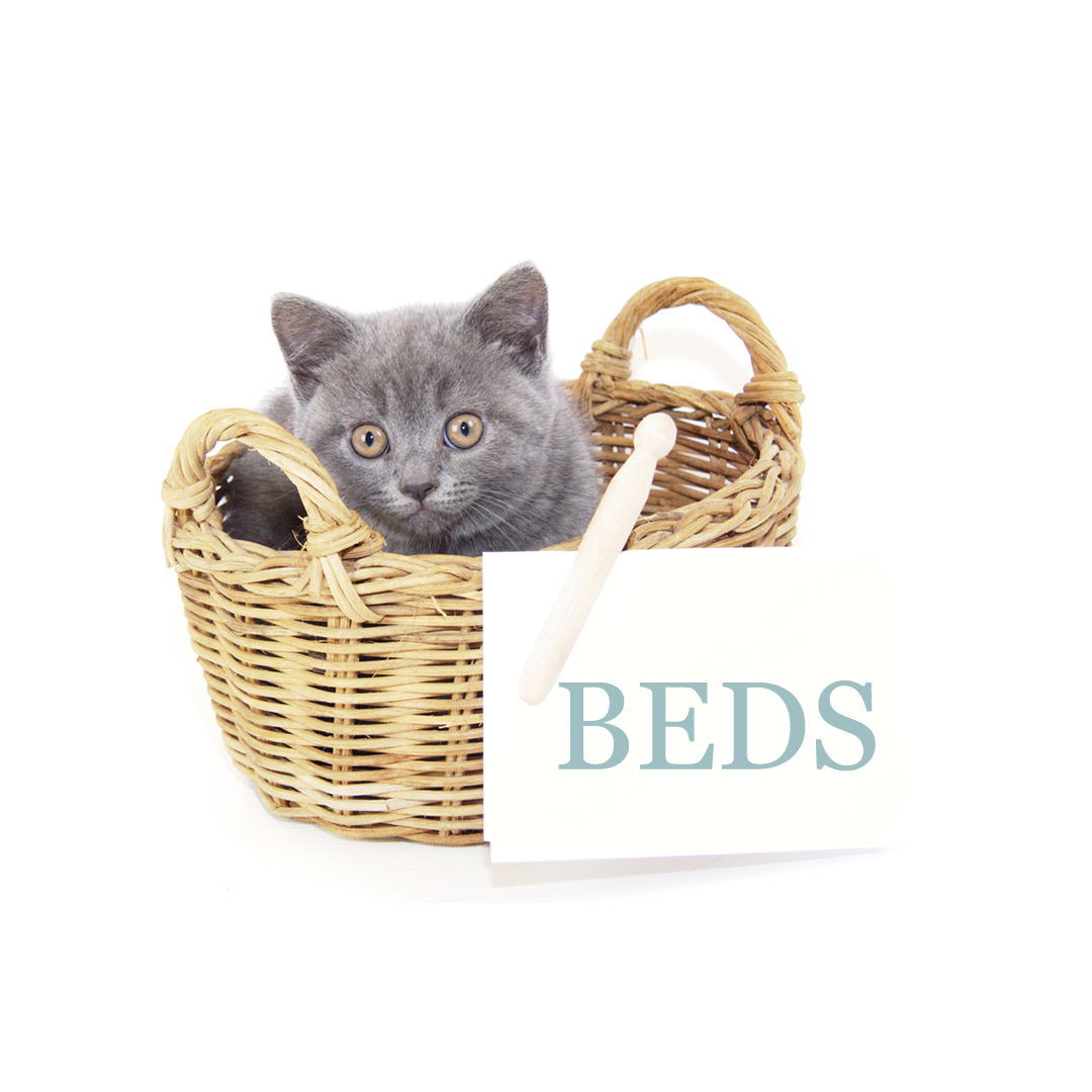 Muffin and Poppy - British Shorthair Luxury Beds