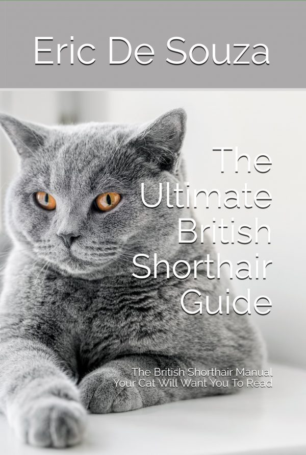 The Ultimate British Shorthair Guide